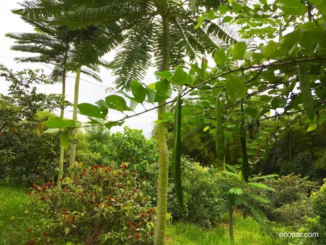 Foto mostra área de reflorestamento da Emplac