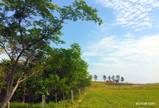 Foto mostra área de reflorestamento com árvores nativas e a escola Ecooar ao fundo
