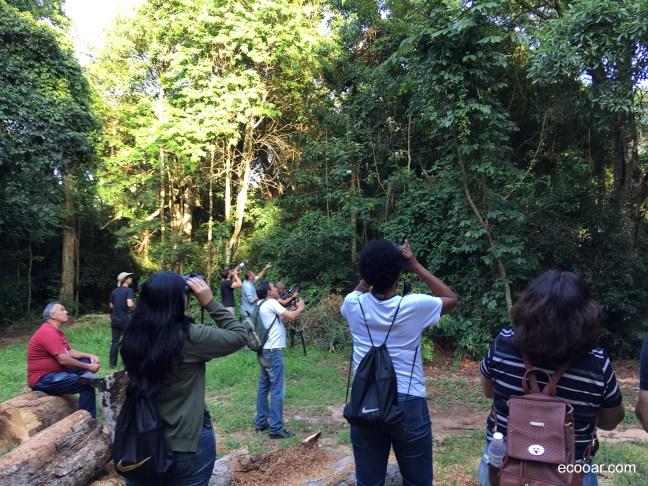 Foto mostra pessoas praticando Birdwatching
