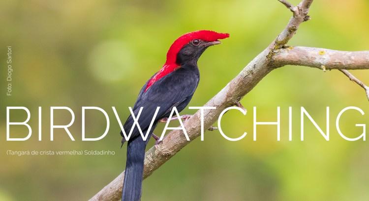 Foto mostra pássaro Soldadinho sobre um galho