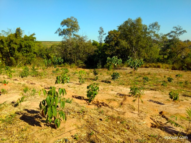 Foto mostra área de reflorestamento onde pode ser realizada a prática de birdwatching