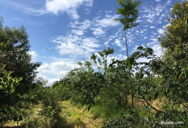 Foto mostra árvores em área de reflorestamento para compensar pegadas de carbono