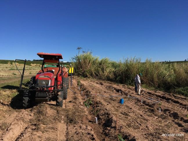 Foto mostra terra arada com mudas de árvores plantadas e trator ao lado