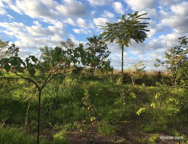 Foto mostra árvores plantadas com o auxílio de tecnologia