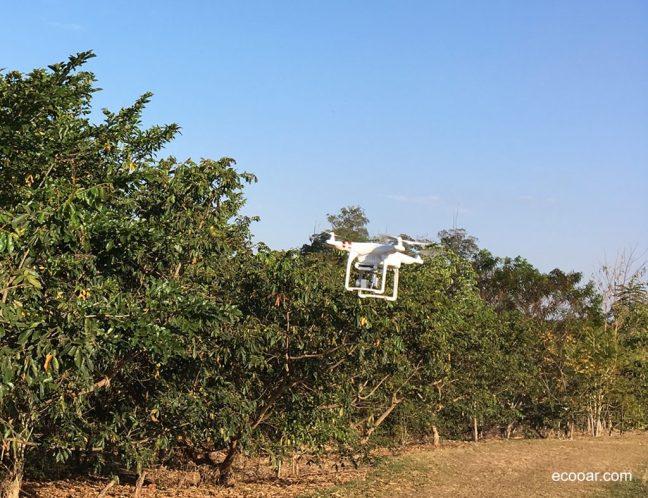 Imagem contém árvores e drone