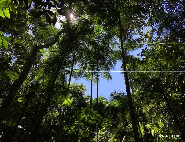 Foto mostra floresta vista de baixo para cima, mostrando a copas de árvores