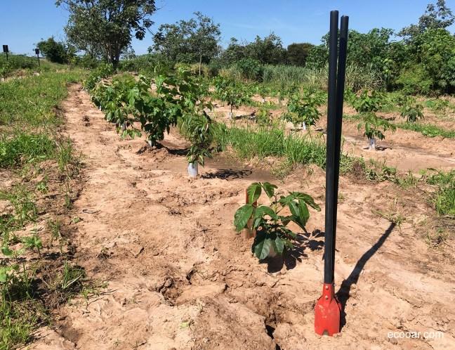 Foto mostra área de reflorestamento com árvores plantadas para compensar uma rede social
