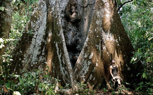 Foto mostra Bruno Torres encostado em uma árvore Samaúma gigante na Amazônia
