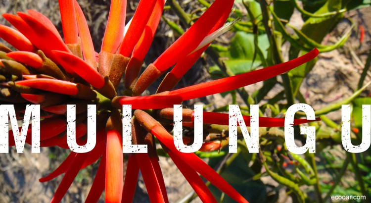 Foto mostra flor de Mulungu com palavra escrita