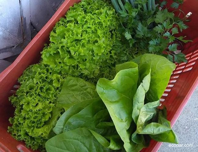 Foto mostra caixa com hortaliças