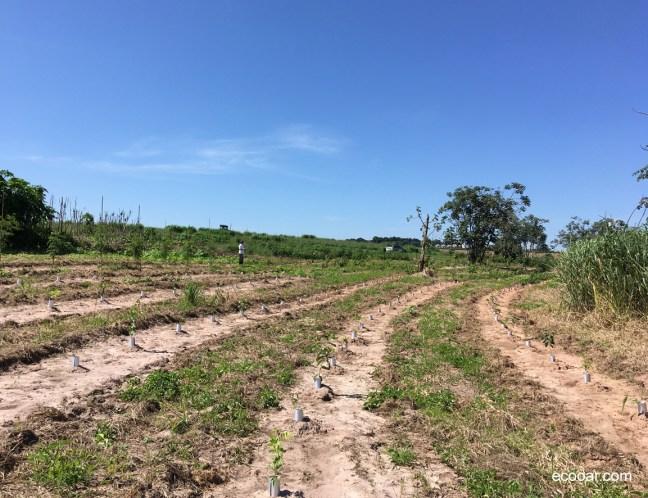 Foto mostra área de reflorestamento da Ecooar