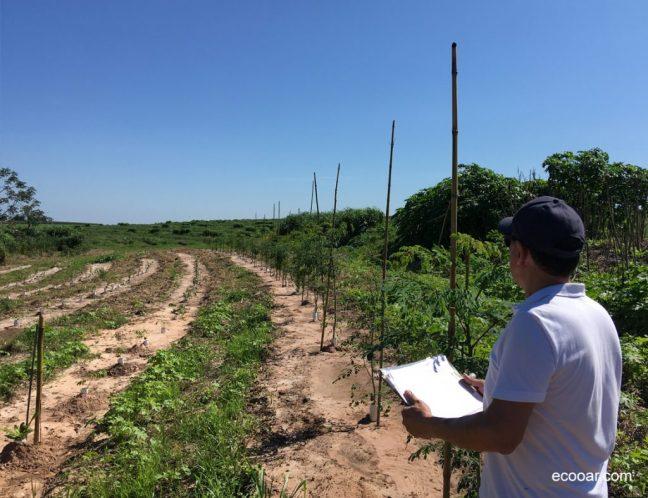 Foto mostra pessoa em área de reflorestamento Ecooar