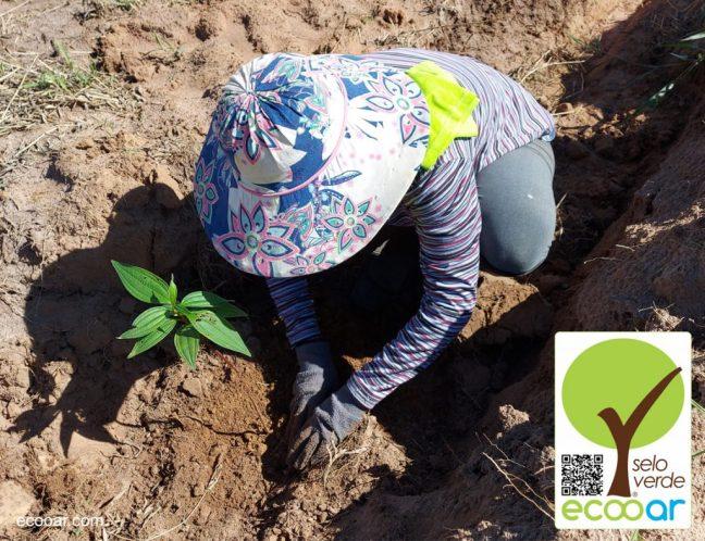 Foto mostra mulher plantando árvore na área de reflorestamento da Relax Cosméticos