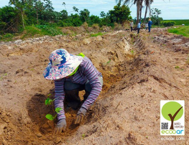 Foto mostra pessoa plantando árvore para a área da Siqueira Cafés