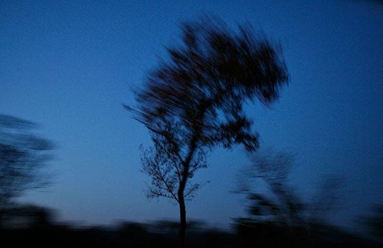Tree041