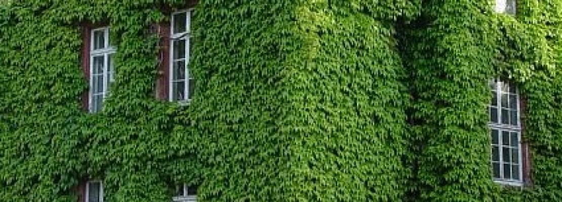 Creare Un Giardino Verticale   Blog Edilnet