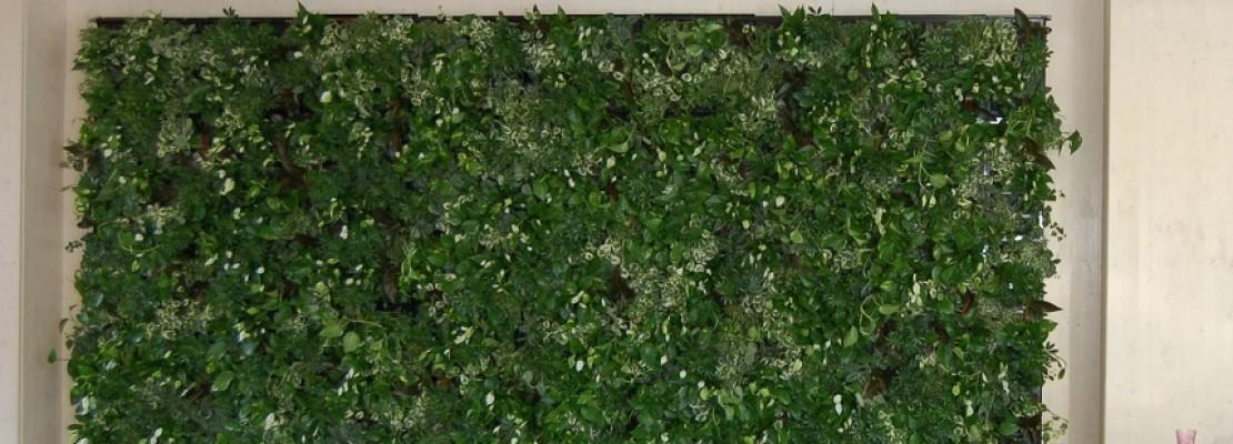 Giardino verticale interno   Blog Edilnet