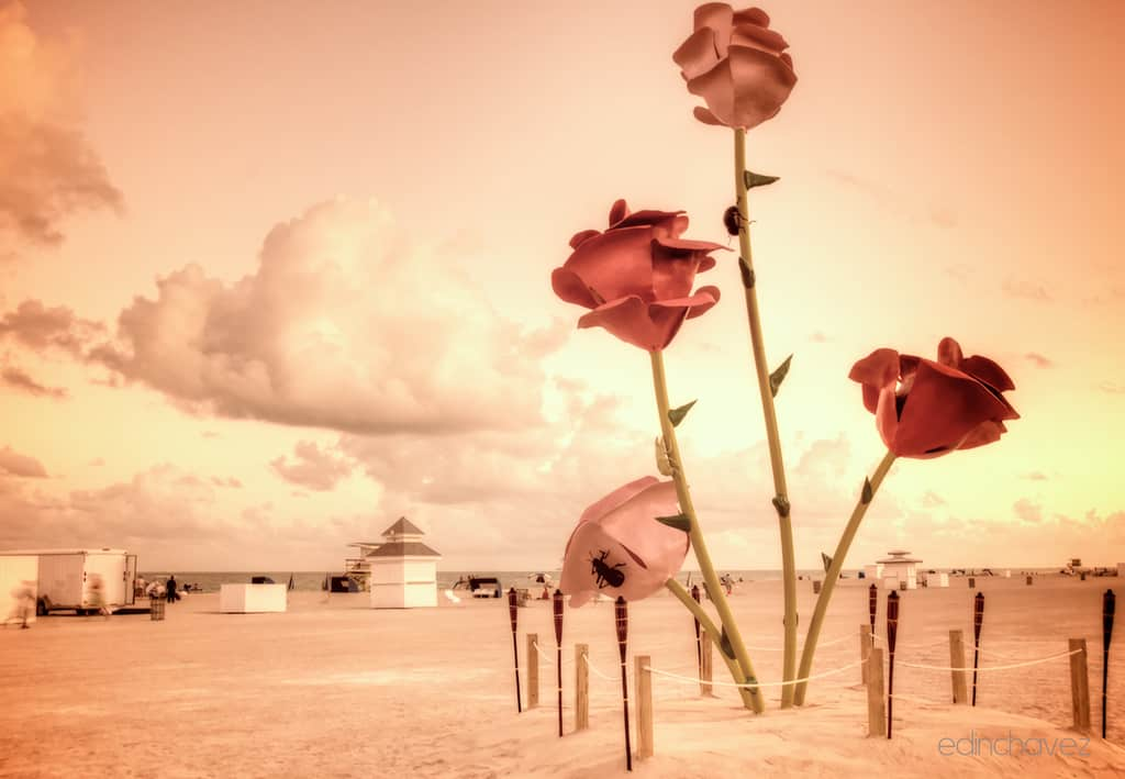 Shot of the Day- Polluted Roses At The Beach - image  on https://blog.edinchavez.com