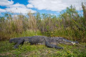 capture-the-everglades-9