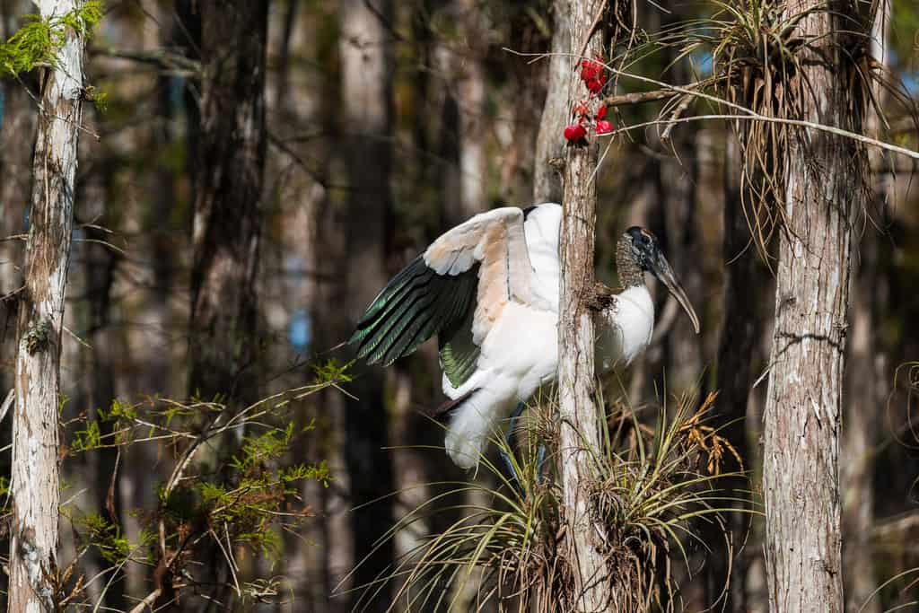 Wildlife Photography Take Your Photography Game Up a Notch - image  on http://blog.edinchavez.com
