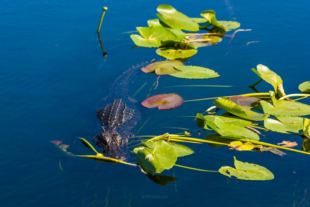 Best Everglades National Park Photography Spots