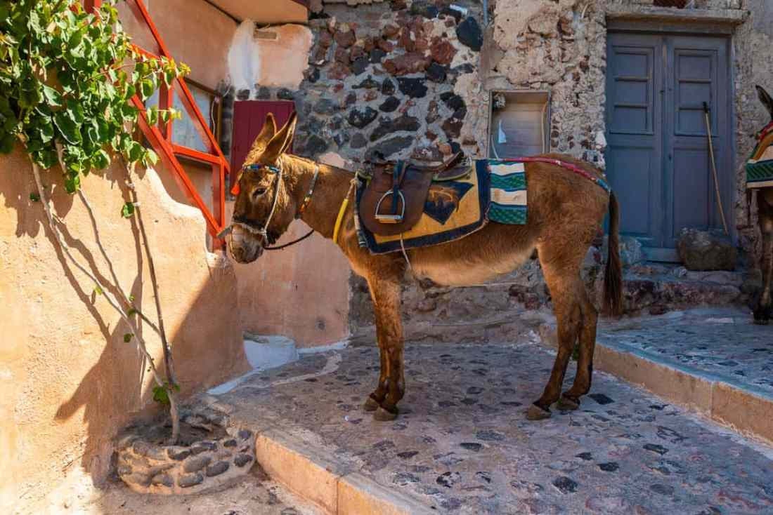 Santorini Donkeys best Photography Spots in Santorini
