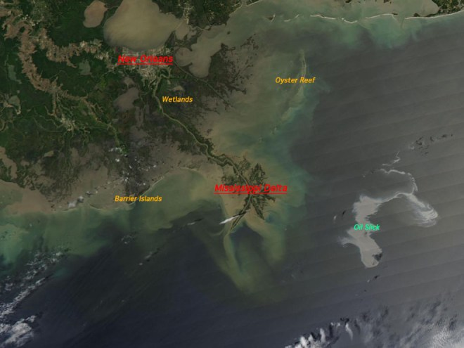 NASA's Aqua satellite captured this image of the Gulf of Mexico on April 25, 2010 using its Moderate Resolution Imaging Spectroradiometer (MODIS) instrument. With the Mississippi Delta on the left, the silvery swirling oil slick from the April 20 explosion and subsequent sinking of the Deepwater Horizon drilling platform is highly visible. Some of the fines that may be levied against BP ($1.2 billion) and Transocean ($75 million), which operated Deepwater Horizon, will go toward restoring the barrier islands, wetlands, and oyster reef damaged by the spill. Photograph courtesy NASA/MODIS Rapid Response Team