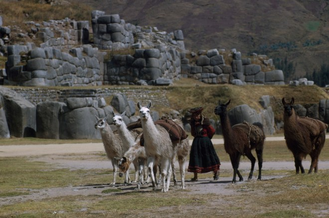 This Peruvian herder and her livestock (llamas) seem unimpressed with the Incan ruins in the background. Photograph by Bates Littlehales, National Geographic