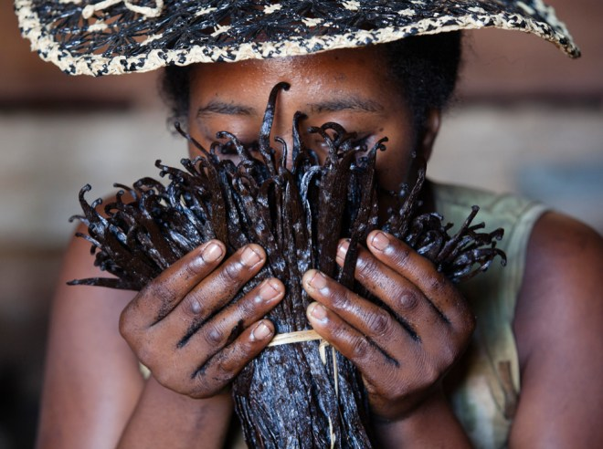 This vanilla expert in Antalaha, Madagascar is of course smelling vanilla—and also checking the valuable crop for mold, a real danger in the humid tropics of the Indian Ocean. Photograph by Pascal Maitre, National Geographic