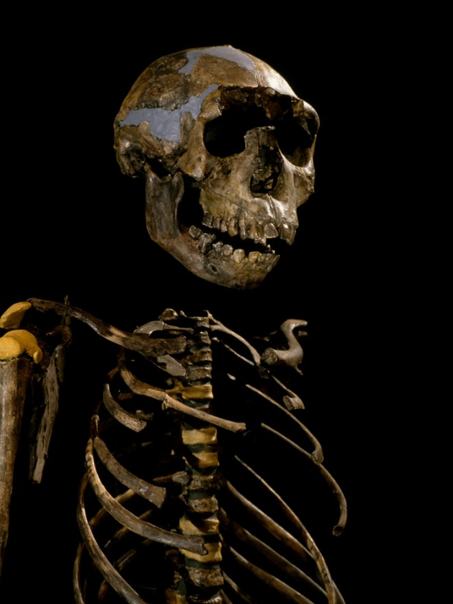 """""""Turkana Boy"""" is the most complete and well-preserved fossil skeleton of a Homo erectus. Turkana Boy, discovered by paleoanthropologists Kamoya Kimeu and Richard Leakey around Lake Turkana, Kenya, has been dated as around 1.6 million years old. Photograph by Kenneth Garrett, National Geographic"""