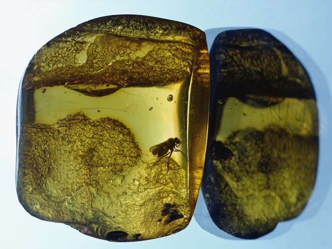 When polished, amber can be translucent. Photograph by Dean Conger, National Geographic