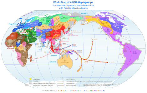 Couldn't you look at this all day? Click to enlarge! Find the O2a haplogroup—that's the population that fascinating new Genographic research has studied. Gorgeous map by Chakazul, courtesy Wikimedia. CC-BY-SA-3.0