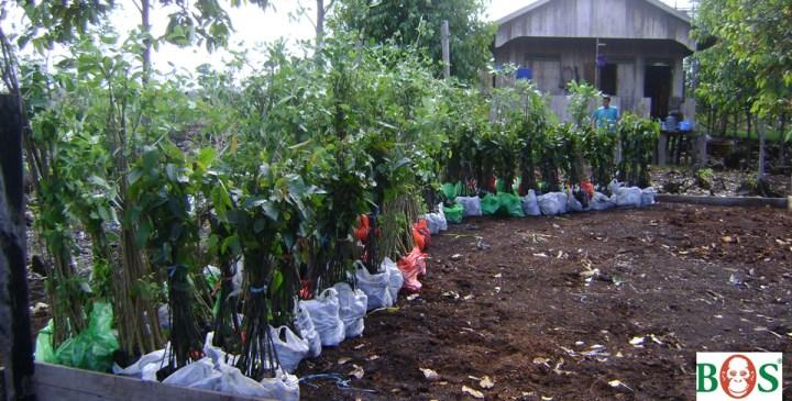 Blandet-fra-Jhanson_dec2015_SOS-Borneo-09