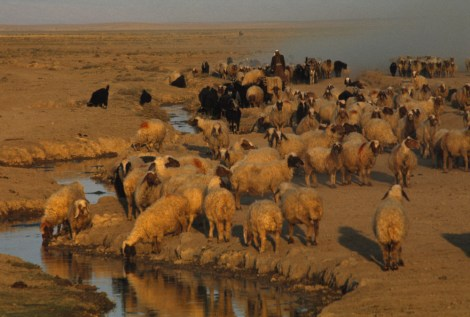 """Sheep and goats are regularly getting blown up,"" says Sean Sutton of Mines Advisory Group, an international weapon-removal group that has cleared more than 11,000 devices in northern Iraq since late 2015. Photograph by Frank and Helen Schreider, National Geographic"