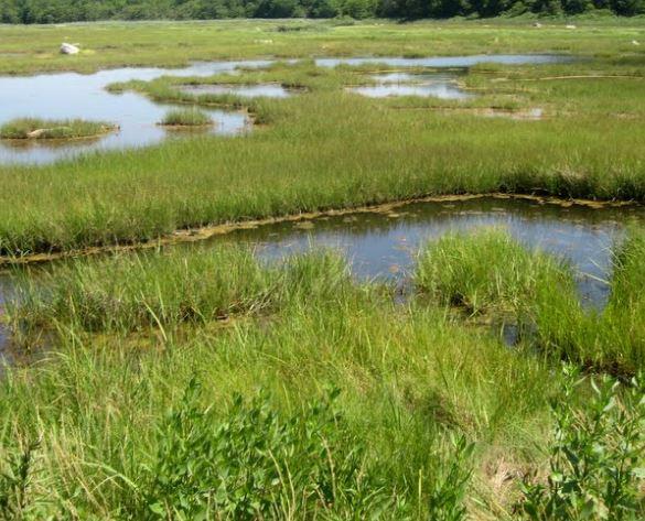 Marsh in Randall's Island Park