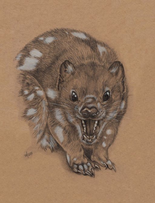 tigerquoll_preview