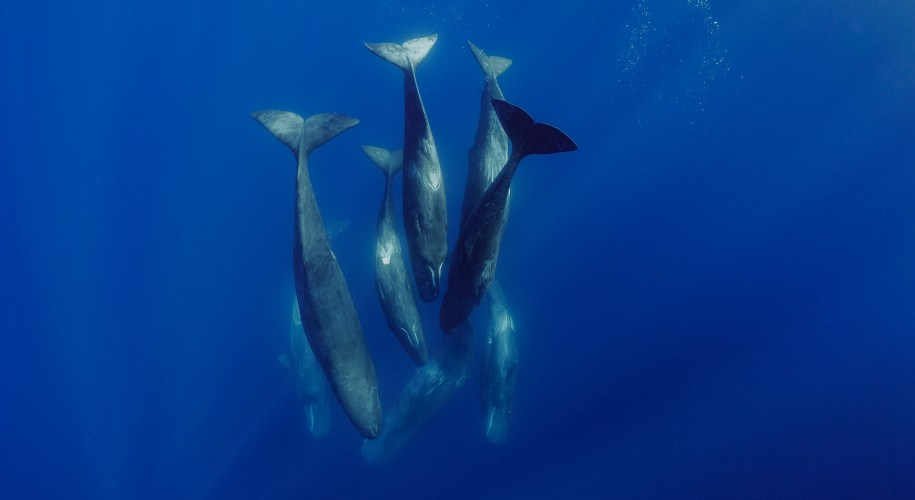 A family of sperm whales