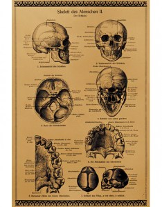 They also vintage anatomy charts rh blog effortless style