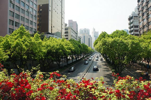 Guangzhou Spring Festival Flower Fair