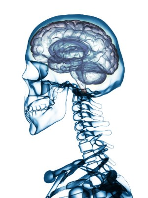 Skull Brain POC