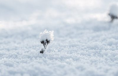 neige-différents-types