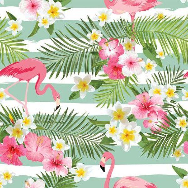 Flamingo 27