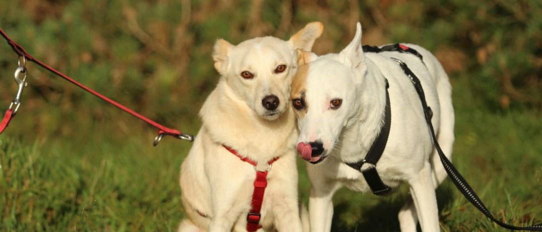 Zwei neue Pflegehunde – Manni und Marinell
