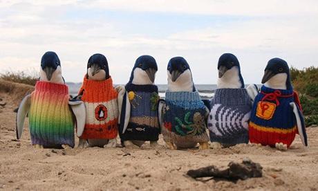 14. Pingüinos vistieron estos sweaters coloridos para que no se coman el petróleo que les quedó en su cuerpo, esperando para ser limpiados.