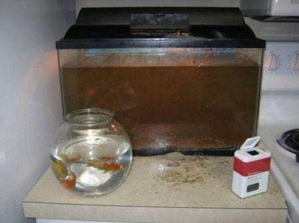 12. Creo que a los peces no les gusta comer pimienta.
