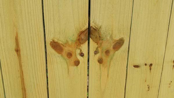 17. El cerco de los gemelos Chihuahua.