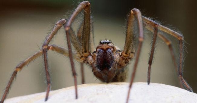 10. Picaduras de araña que dejan secuelas terribles