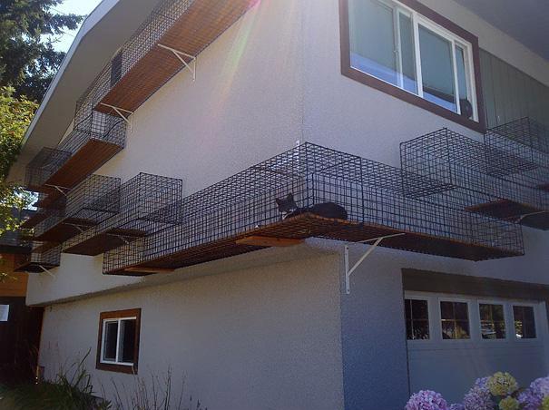 19. Paseo externo seguro para gatos