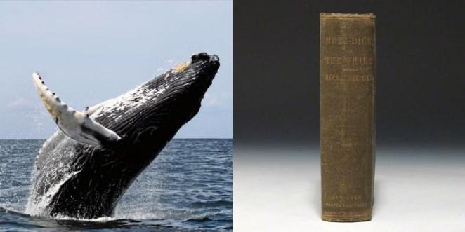 20. Hay ballenas hoy en día que siguen vivas antes de que Moby Dick fuese escrito.