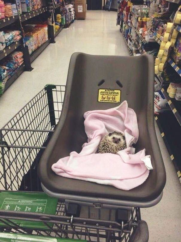 I Take My Hedgehog Grocery Shopping, And No One Tells Me To Stop